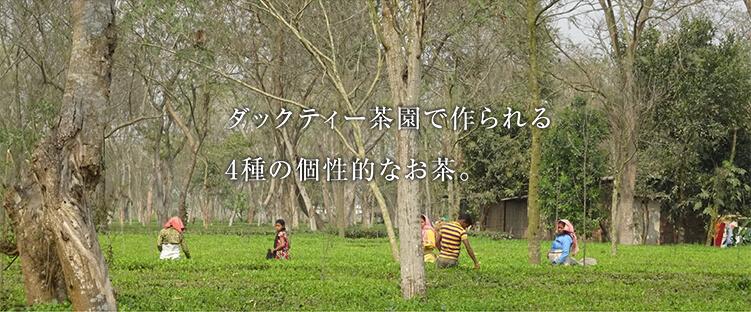 ダックティー茶園で作られる4種の個性的なお茶。 ダックティー茶園の茶摘み風景